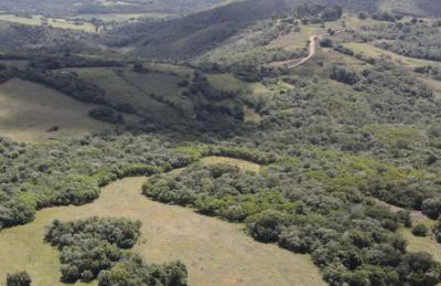 Buche dein CO2 neutrales Event auf Gigstarter in Kooperation mit the Green Branch